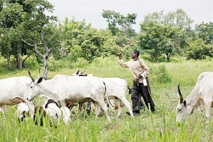 Ruga settlements: Presidency highlights benefits as Gov. Umahi denies inclusion of South-East, Sout...