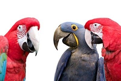 The parrots, senior partners, and experts amongst us