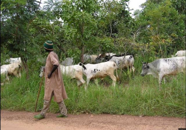 Nigeria: Marauding Cattlemen And The Burning Fuse