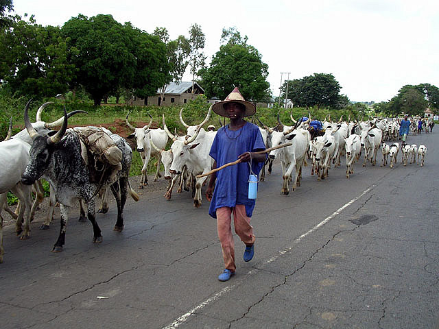 The Fulanis, Herdsmen And Other Stories
